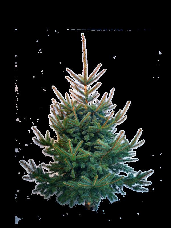 Weihnachten ohne Weihnachtsbaum? Auf keinen Fall!