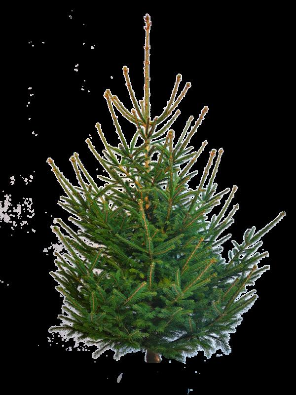 Keine Zeit einen Weihnachtsbaum zu kaufen?